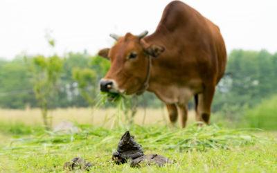 Ochrona środowiska a hodowla trzody chlewnej